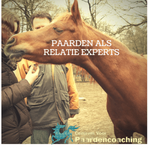 Liefdestips van paarden (4)
