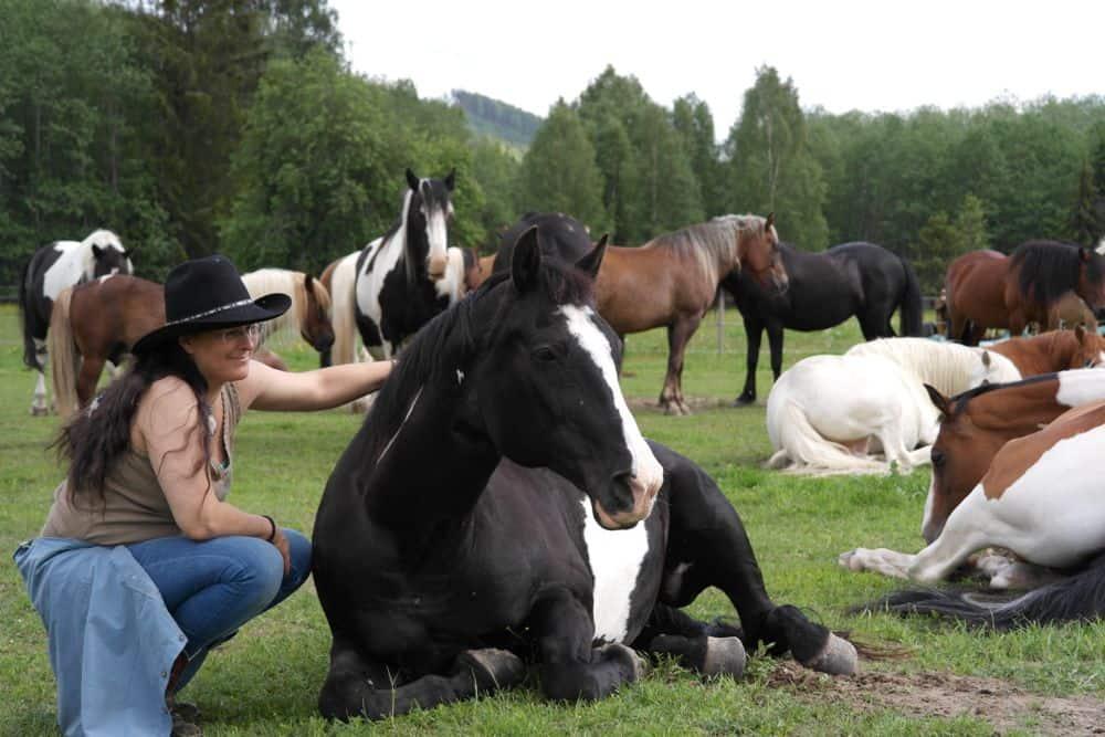 De mensvriendelijke paarden laten ons delen in het kuddegevoel
