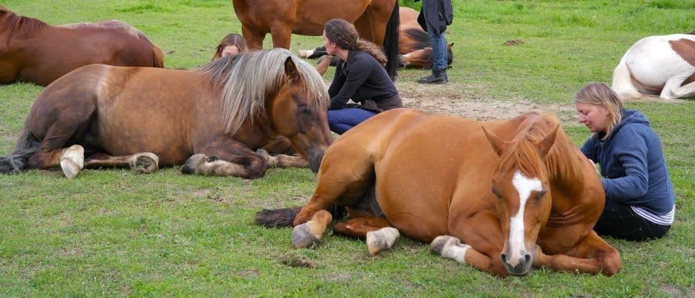 Werken aan jezelf in een paardenkudde