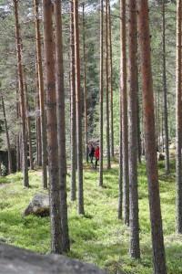 Ontspanning in de uitgestrekte bossen