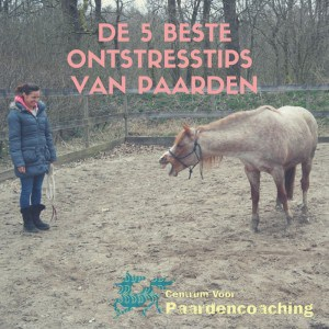 ontstresstips_paarden