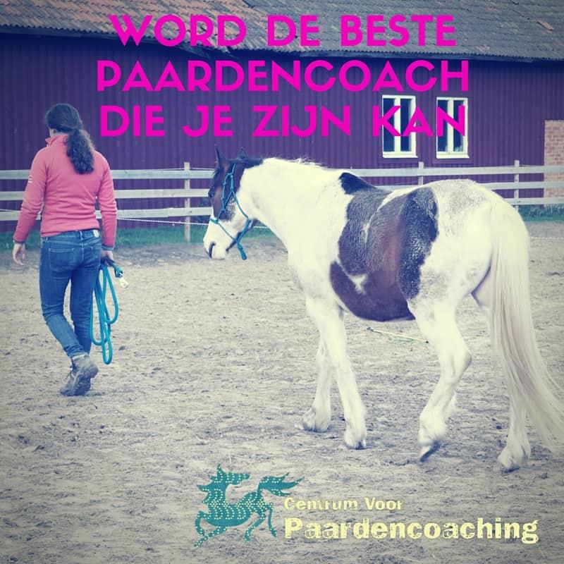 beste_paardencoach