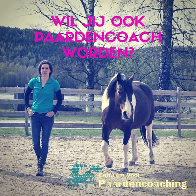 paardencoach_worden