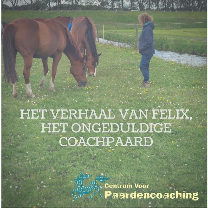 Coachpaard_felix