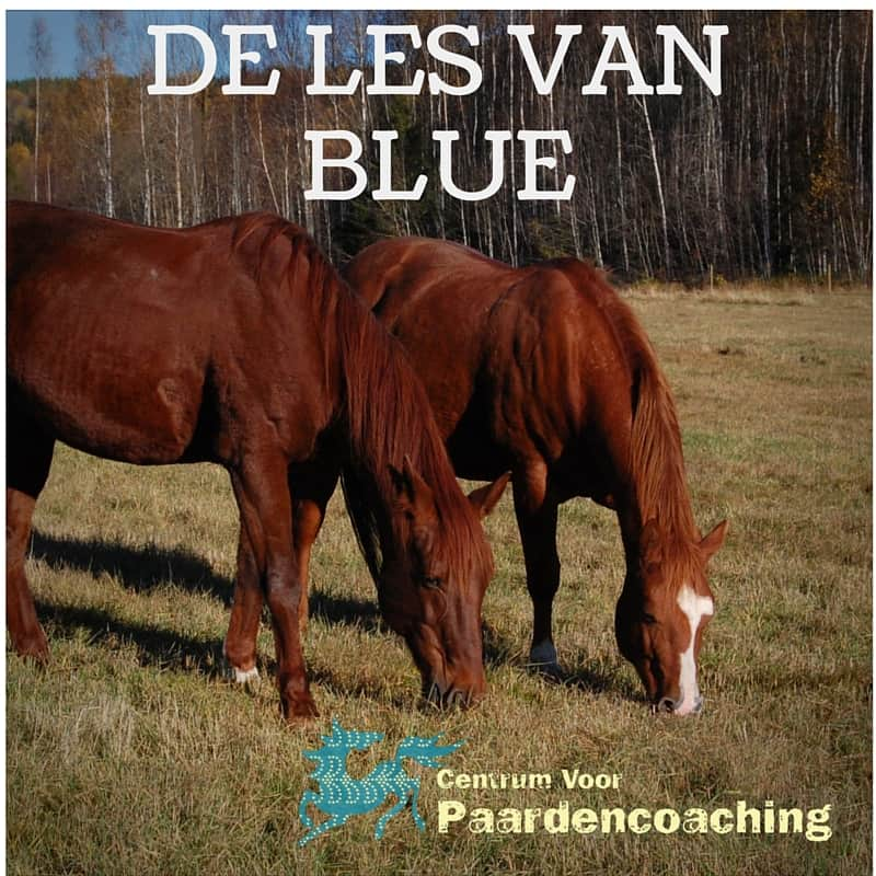 Les_van_Blue