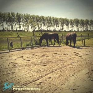 Coachpaard_graast