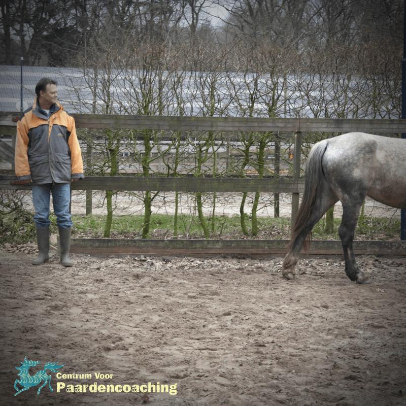 paard_loopt_weg
