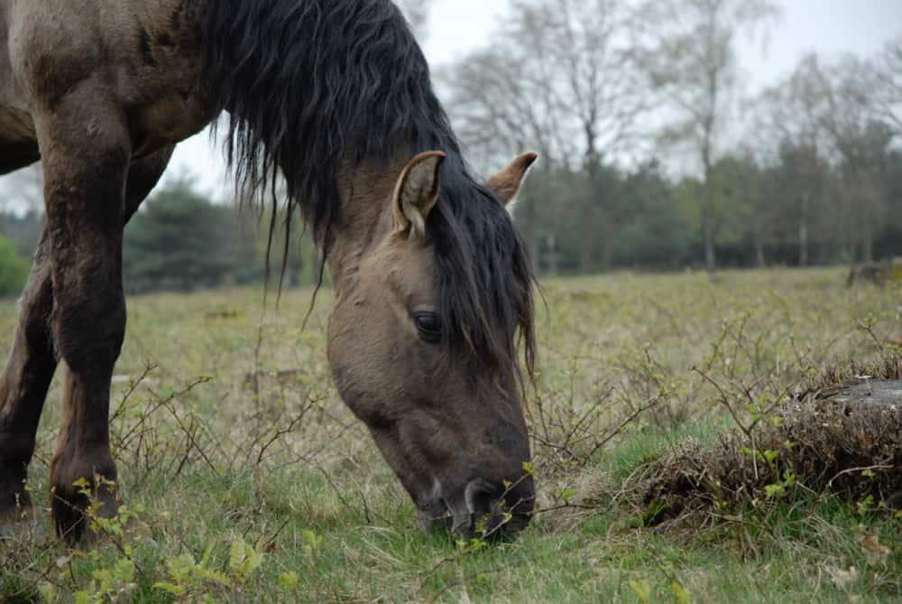 Paardencoaching in de natuur